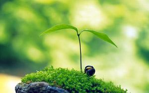 silvicultura cu zeolit