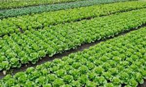 zeolit agricultura bio