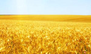 zeolit agricultura