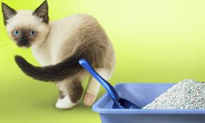 zeolit litiera pisica
