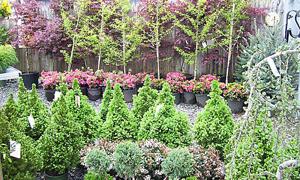 zeolit silvicultura
