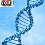 Zeolitul acționează la nivel celular