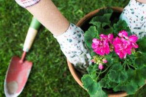 zeolit pentru flori