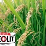Aplicații ale zeolitului în domeniul agriculturii