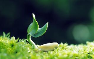 zeolit pentru plante